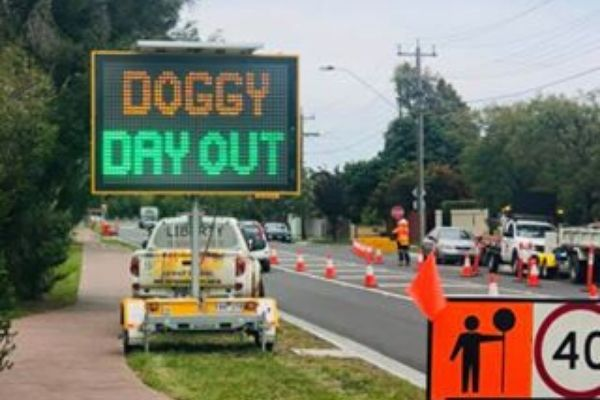 Doggy Day Out VMS Board Hire